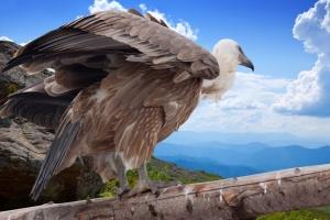 Kroatiens Vogelwelt