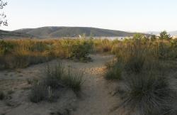 Strand Sahara