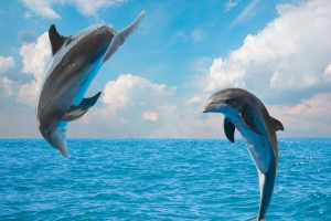 Abenteuerliche Begegnungen unter Wasser
