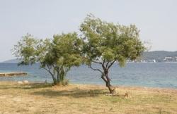Beach Viganj