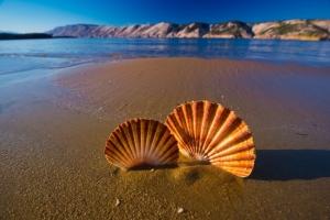 Der Paradiesstrand in Lopar auf der Insel Rab ist der wohl bekannteste Sandstrand Kroatiens