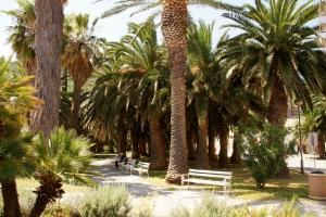 Palms in Vis