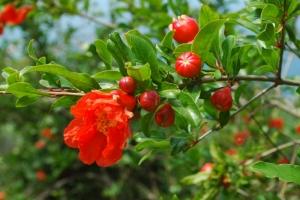 Endemische Pflanzen und Tiere
