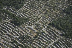Terrace fields - Racisce