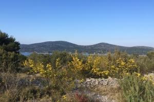 Insel Žižanj