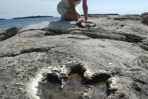 Dinosaur footprint on Veli Brijun