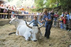 Ucka Messe - Boskarin (Istrische Rinder)